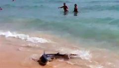Na Mallorce připlul žralok blízko k turistům, způsobil paniku. Pak ho utratili