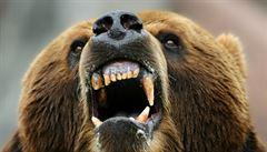 Po 175 letech se v Portugalsku objevil medvěd hnědý. Přišel ze Severu Španělska
