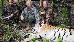 Zachraňte tygry, velí Putin. Jenže čínské peníze jsou silnější než strach
