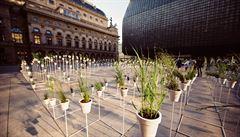 Piazzeta Národního divadla plná květin. Výstava má upozornit na léčivé rostliny