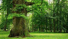 Vědci zmapovali 12 tisíc starých stromů v jihomoravských luzích