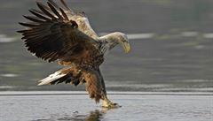 Traviči ptáků používají jed nebezpečný i pro člověka, psy i kočky, varují ornitologové