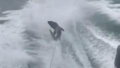 Identita krutých rybářů z USA týrajících žraloka odhalena. Nešlo o první přešlap