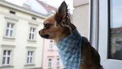 Metr v Praze stojí o 20 tisíc víc než před dvěma lety. Byty budou zdražovat dál