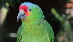 Šumperk zažil Papouščí den. K vidění zde bylo 92 exotických ptáků