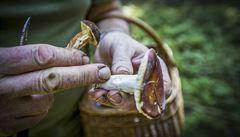 Houbaření v listopadu a nové druhy hub z jihu. Oteplování mění zvyky houbařů