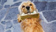 Psi, kteří vydělávají více než vy. Domácí mazlíčkové jsou na sítích slušný byznys