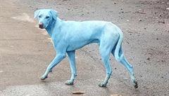 V Indii běhají modří psi. Bombajská továrna vypustila do řeky neznámou chemikálii