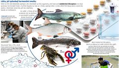 Vědci varují před důsledky znečišťování vod. Ryby v Česku mění pohlaví