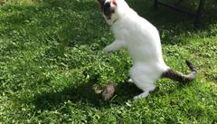 Když si kočka hraje s psí hračkou