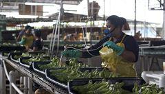 V jakých podmínkách pracují baliči banánů? 'Neobstála bych ani v Panamě ani Kostarice'