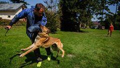 Policie testuje nová psí plemena, štěňata se začínají cvičit už od dvou měsíců