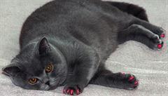 Kočičí pedikúra? Nový instagramový trend je podle veterinářů 'krutý a groteskní'