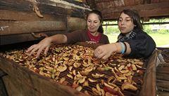 Navštivte Jablečnou slavnost v Hostětíně. Okouzlila i prince Charlese
