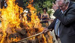 Zoo Dvůr spálila na protest proti pytláctví 33 kilogramů nosorožčí rohoviny