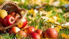 Sklizeň ovoce byla loni druhá nejvyšší od roku 2010, sucho však ovlivnilo kvalitu