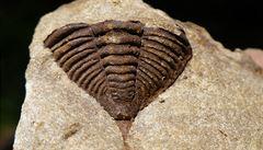 Zeptali jsme se vědců: Kde v Česku máte největší šanci najít zkameněliny?