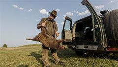 Na Zlínsku platí nová opatření proti africkému moru. Chovatelé musejí porazit všechna prasata