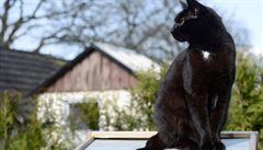 Padající hvězdy, černé kočky, rozsypaná sůl. Jak vznikly pověry?