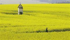 Konec monotónně žlutého Česka: sedláci 'rozbijí' pole. Kdo tak neučiní, přijde o dotace