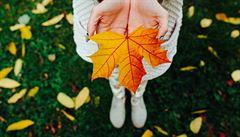 Zeptali jsme se vědců: Co rozhoduje o barvě podzimních listů?