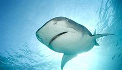 Austrálie zrušila kvůli žralokům závody surfařů. S útoky se potýkají i USA