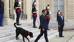 Macronův pes se během jednání vymočil u krbu. Francie se baví virálním videem