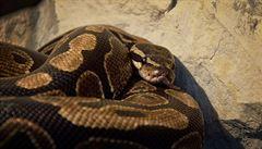 Vědci z Basileje marně shánějí lidi pro studii o strachu z hadů