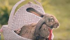 VIDEO: 'Vezměte si příklad z králíků.' Polsko povzbuzuje občany, aby plodili víc dětí
