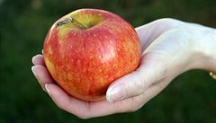 Alergici na jablka mohou pít oxidovanou šťávu, zjistili vědci