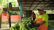 Vážení banánů