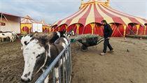 Cirkus Berousek: o zvířata se starají zaměstnanci.
