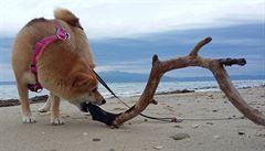 PSÍ BLOG: Road trip se psem po Evropě? Neskutečná jízda