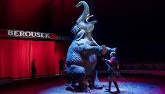 Protestovat proti cirkusům je módní trend, k týrání zvířat tam nedochází, tvrdí veterinář