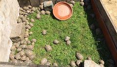 U silnice v Praze se volně pohybovalo 264 chráněných želv. Jedna stojí tisíce, nikdo neví, kde se vzaly