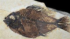 Zeptali jsme se vědců: Podle čeho se pozná, jak stará je zkamenělina?