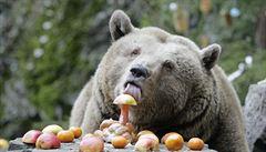 Medvěd na Vsetínsku usmrtil další ovce, chystá se odchytová klec