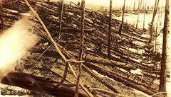 Svědectví stromů o tunguské události. Letokruhy prozradily víc, než vědci čekali