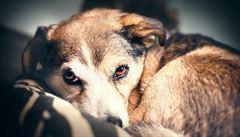 Silvestra se majitelé psů obávají. Vystresovaná zvířata končí většinou v útulcích