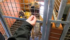 Většina psů ztracených na Silvestra je už doma. Narostl ale počet nechtěných zvířat pod stromečkem