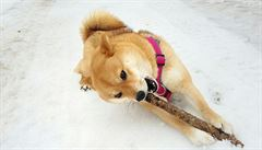 PSÍ BLOG:  Pro psí oči i sníh v Chorvatsku najdeme