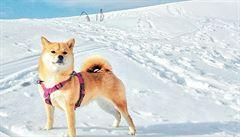 PSÍ BLOG: V čem je jiné cestování se psem?