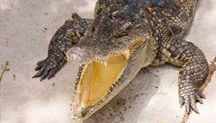 Ruská policie našla ve sklepě petrohradského domu krokodýla