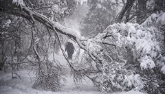 Silný vítr udeří na Moravě, v neděli večer i na západě. Lidé mají zajistit okna a jezdit opatrně