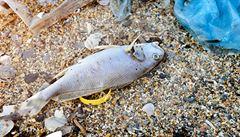 V pražském rybníku uhynulo kvůli teplu a suchu zhruba 150 kilogramů ryb