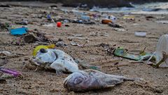 Rybáři na Nilu loví i plastové lahve a vyplácí se jim to. Je to šance, jak řeku vyčistit