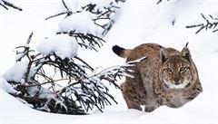 Přítulná zvířata útočí nejčastěji. Na která si dát pozor?