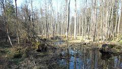 Polská těžba v pralese porušuje unijní právo, stojí v podkladech pro soud