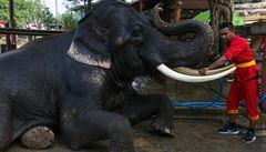 HUDEMA: Zachraň slona puškou. Nepřítelem divokých zvířat není trh, ale slabý stát
