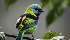 Pozorování ptáků jako atrakce? Do kolumbijského pralesa jedině s dalekohledem
